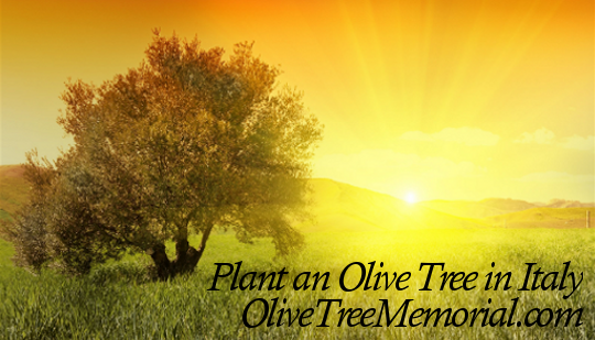 Plant an Olive Tree in Italy